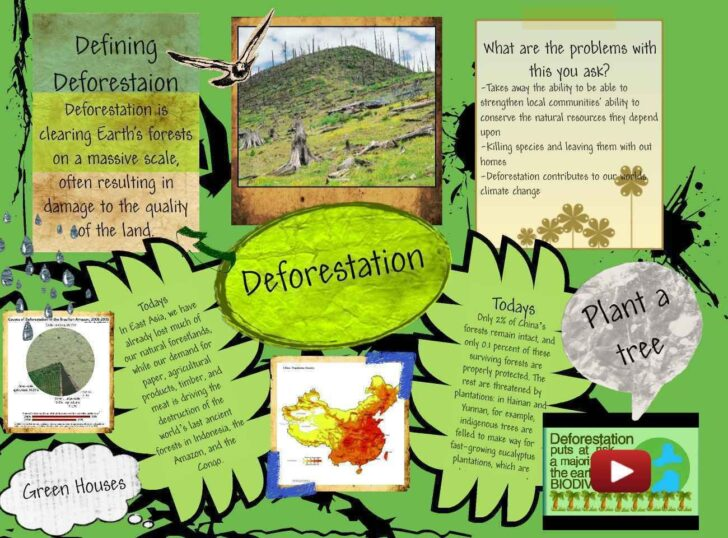 Environmental Issues Essay Brainly