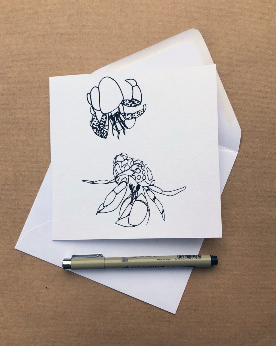 Large Size of What Is A Hermit Crab Essay