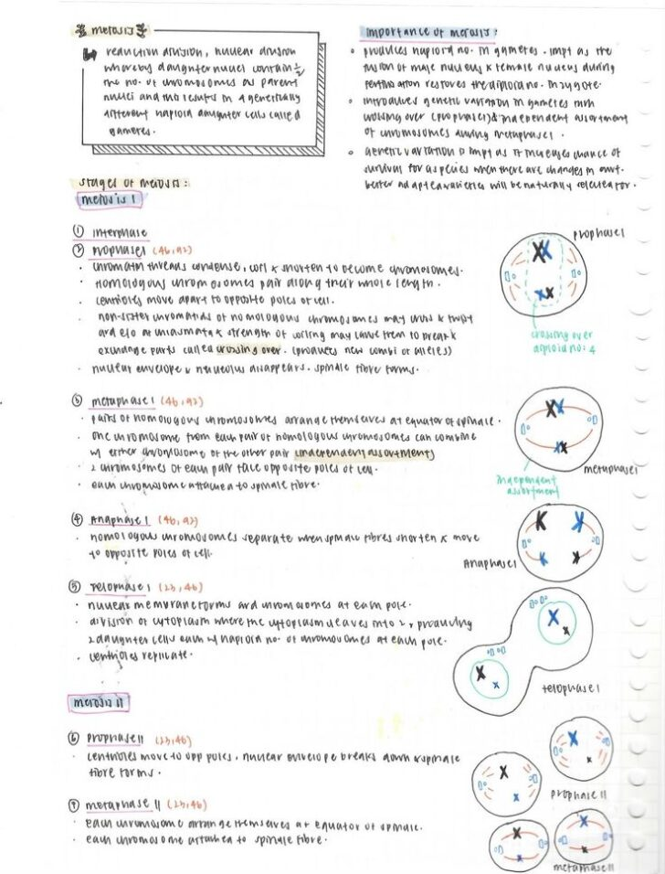 Why Biology Major Essay Example