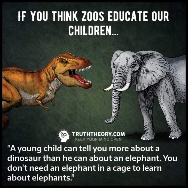 Why Animals Should Not Be Kept In Zoos Reasons Essay