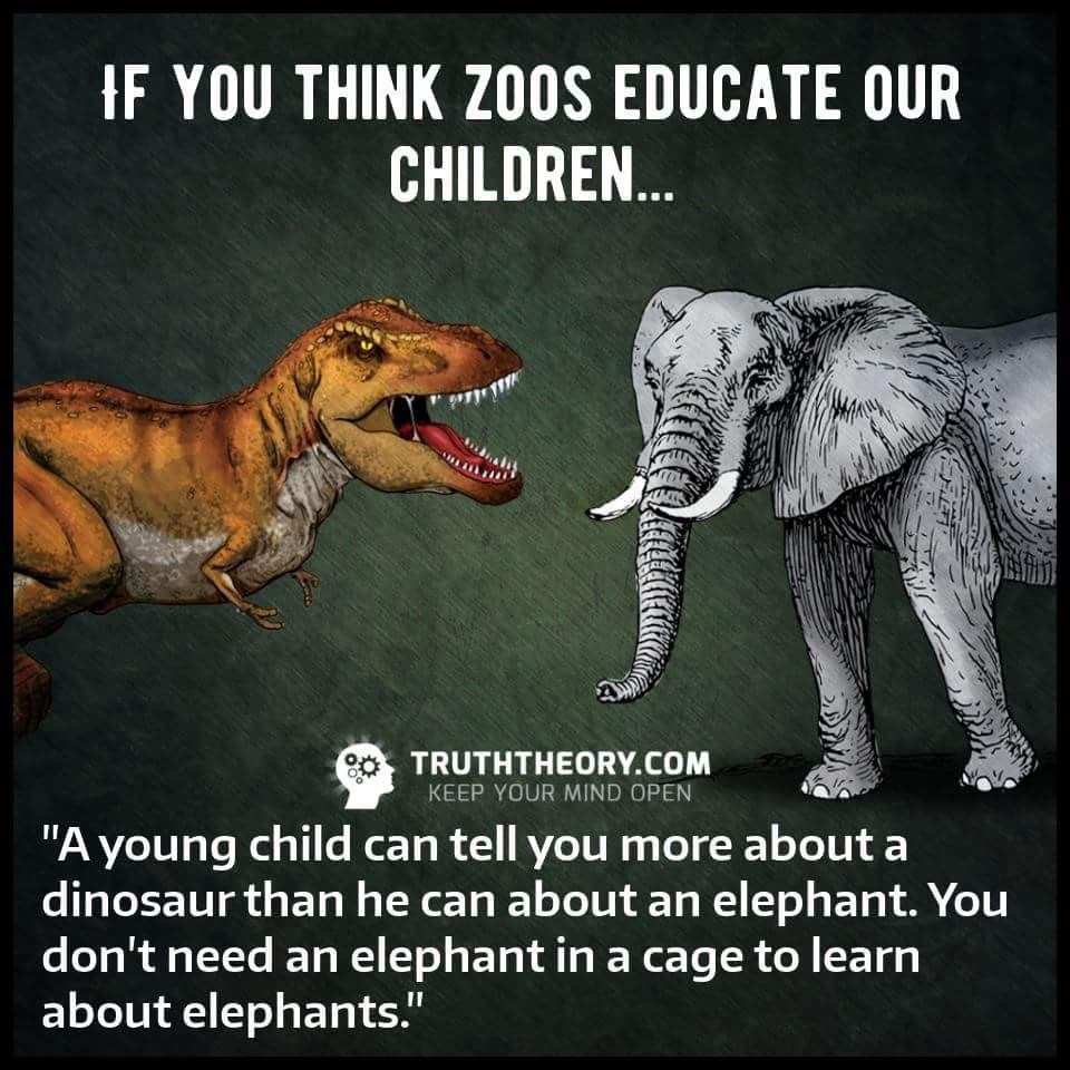 Full Size of Why Animals Should Not Be Kept In Zoos Reasons Essay