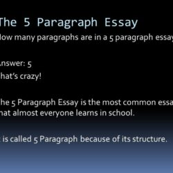 Essay Writing Service Paragraph Many Sentences Creditdirectorycoza Gearhostpreview How Paragraphs Is An