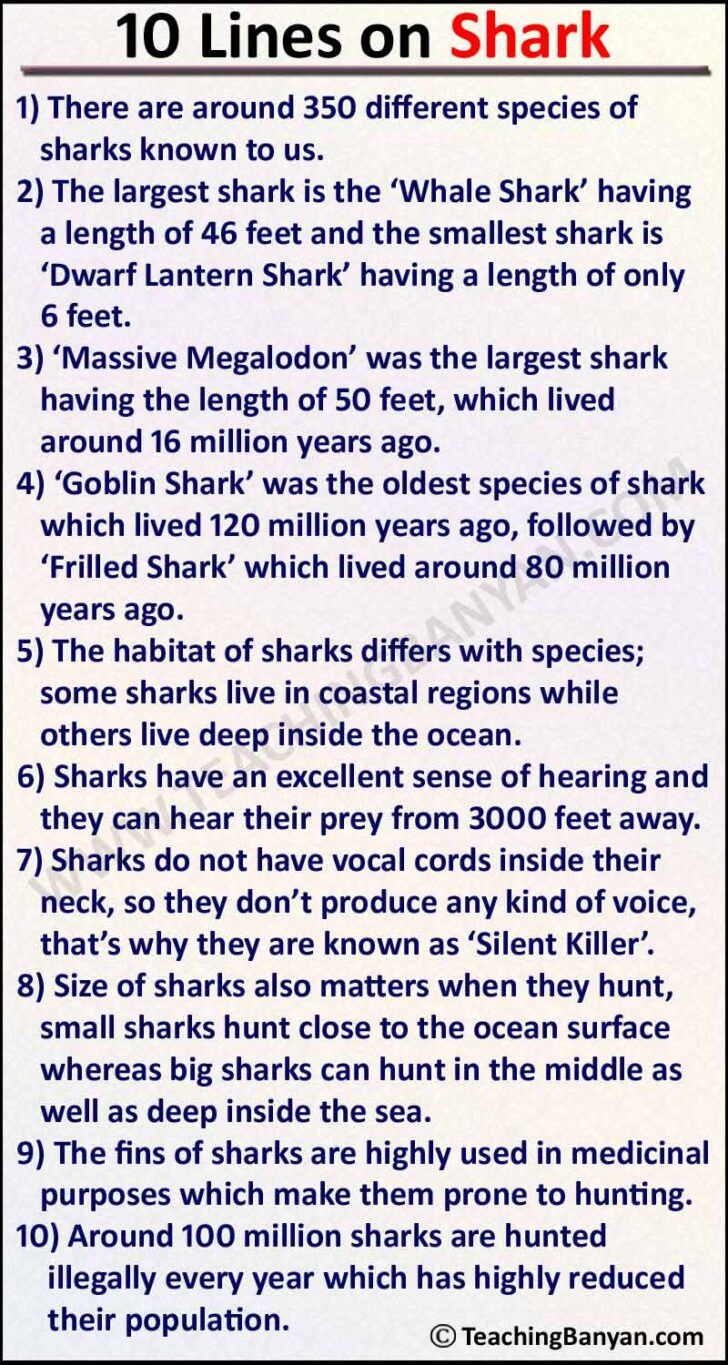 Medium Size of Lines On Shark In English For Children And Students Essay Process Analysis Descriptive