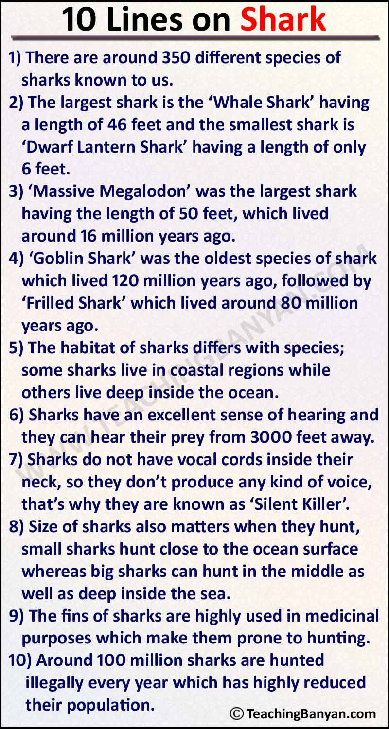 Full Size of Lines On Shark In English For Children And Students Essay Process Analysis Descriptive
