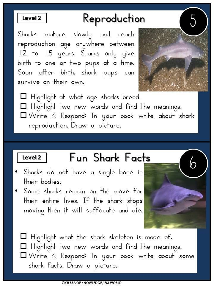 Full Size of Sharks Essay Jade Hs Shark Social Problem And Solution Synthesis Ap Lang Corrector Review