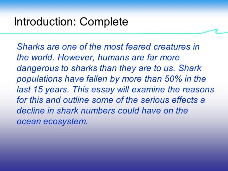 Medium Size of Sharks In Danger Causes And Effects Of The Decline Shark Numbers Worldwide Help Essay