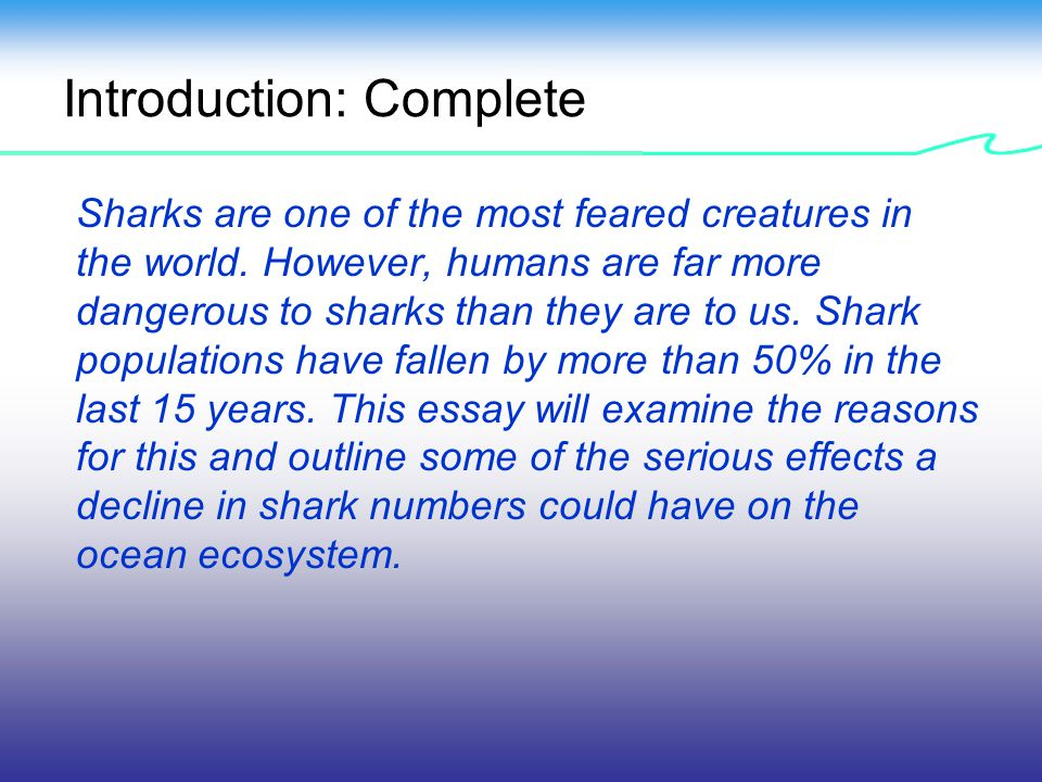 Full Size of Sharks In Danger Causes And Effects Of The Decline Shark Numbers Worldwide Help Essay